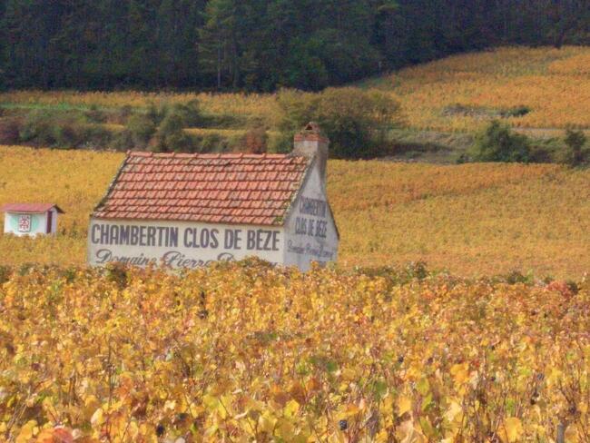 畑とクロドベーズ.jpgのサムネイル画像