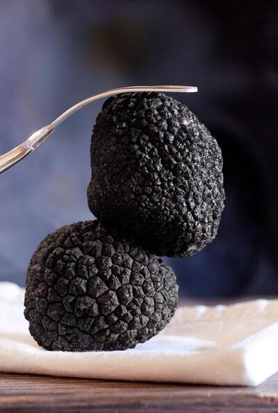 winter-truffle-.jpgのサムネイル画像のサムネイル画像